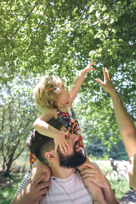 Little girl on her father's shoulders stretching to touch a branch