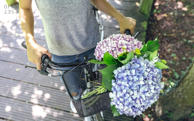 Woman with bicycle with a bouquet of hydrangeas in the basket