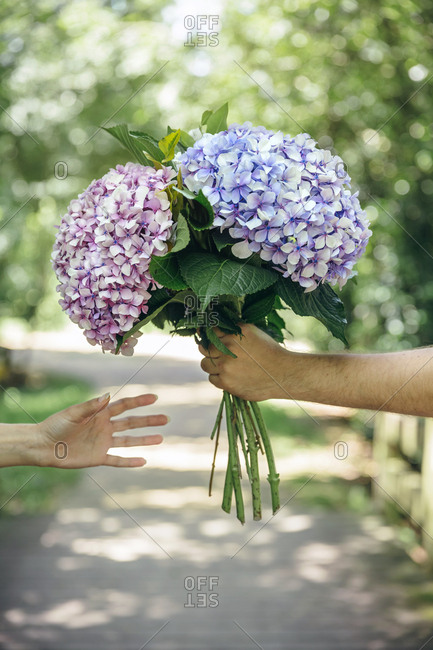 Detail of man\'s hand giving a bouquet of hydrangeas to a woman