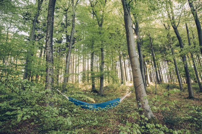 Germany- Rhineland-Palatinate- Vulkan Eifel- Holzmaar- hammock between trees in forest