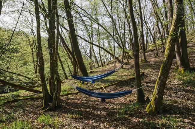 Germany- Rhineland-Palatinate- Vulkan Eifel- hammocks between trees in forest