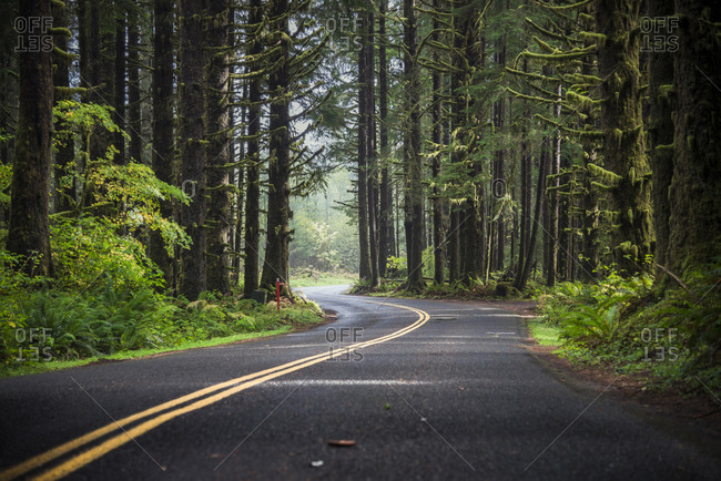 USA- Washington State- Hoh Rain Forest- Road