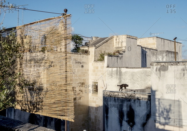 Cat prowling the rooftops of Lecce, Italy