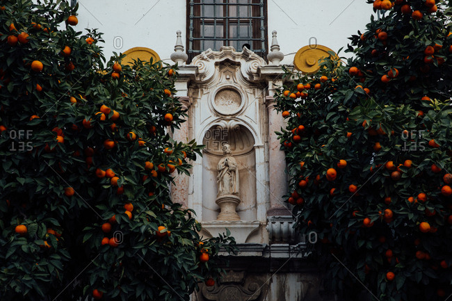 Statue of saint framed by orange trees full of fruit