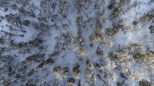 Looking down into a wintery forest in the Engandin valley, Switzerland
