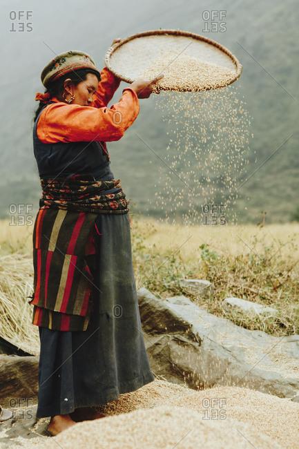 Langtang, Nepal - November 4, 2011: Tamang woman sifting grains