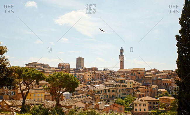 View of skyline dominated by the Torre del Mangia in Siena, Italy