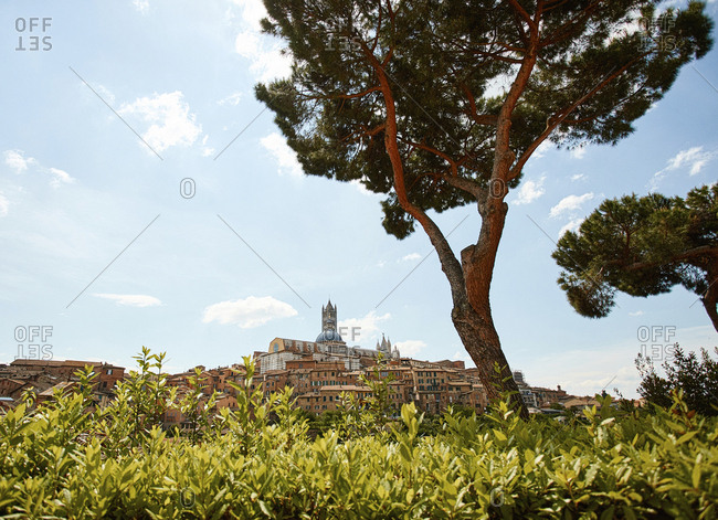 Wide angle view of cityscape and Cathedral of Siena, Italy