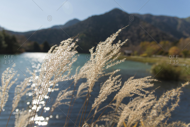 Close-up of plants by Yuno Lake during sunny day