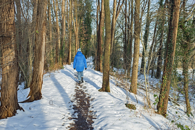 Rear view of a single woman walking on path in snowy forest
