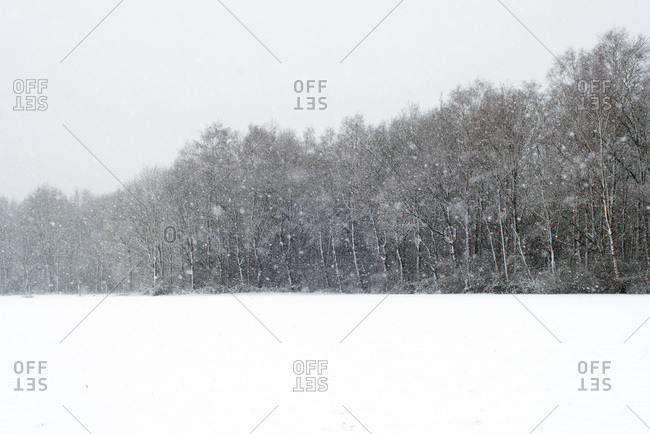 Trees and meadow covered in snow during snowfall