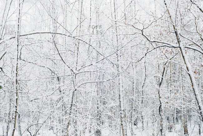 Branches of bare trees in winter forest covered in snow
