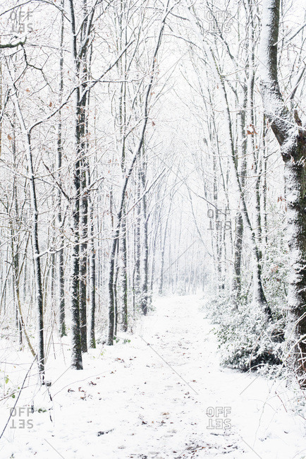 Path in forest covered in snow