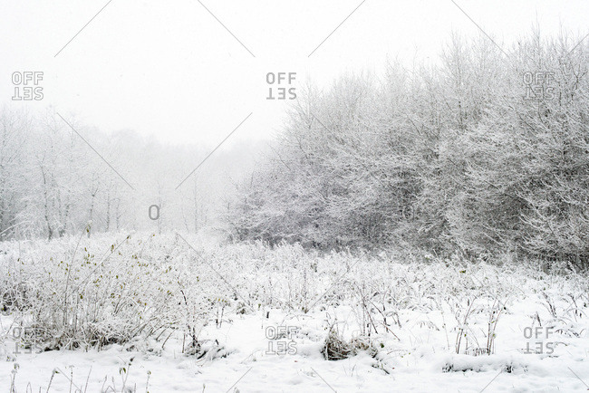 Winter snowy countryside with trees and bushes during snowfall