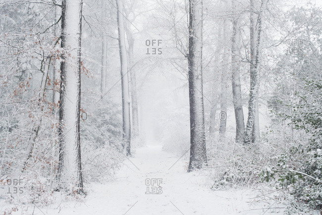 Trail in snowy forest during snowfall