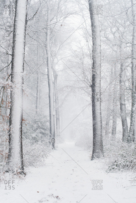 Path in snowy forest during snowfall
