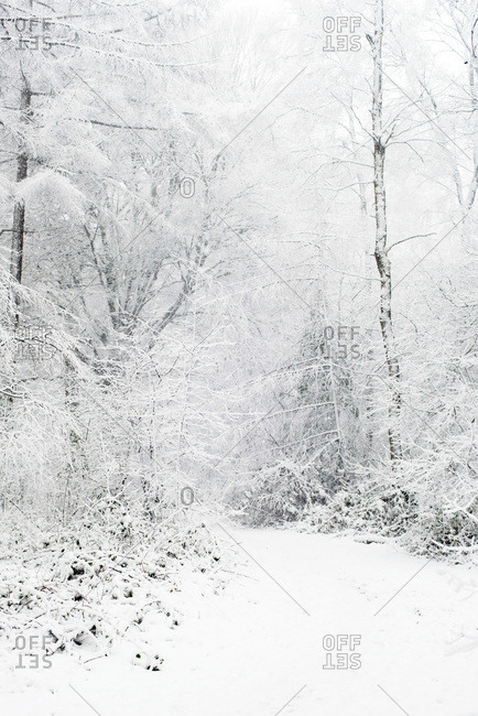 Snow-covered path in a forest during snowfall