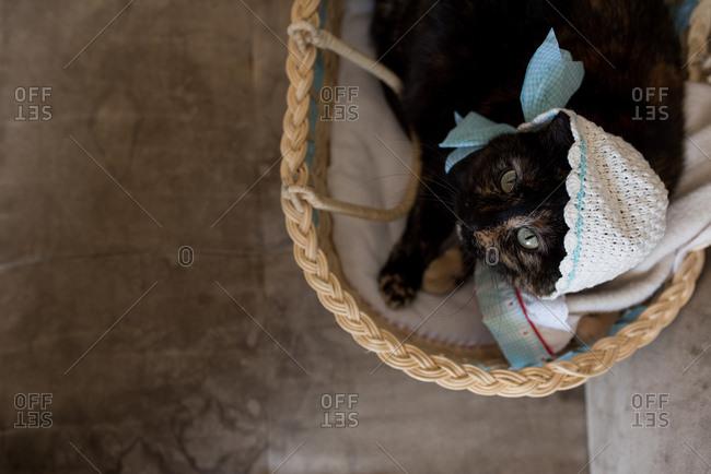 Cat in a basket wearing a bonnet