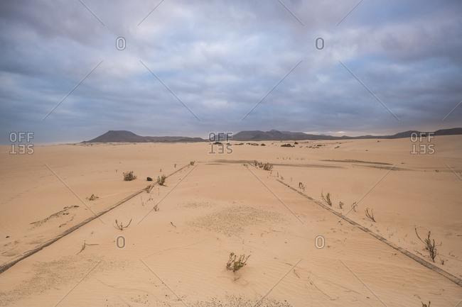 Lines in the desert