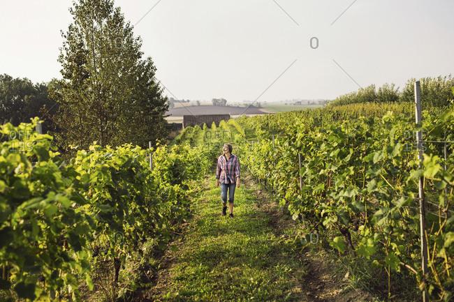 Woman walking in vineyard