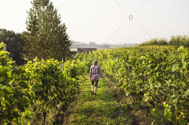 Rear view of woman walking in vineyard