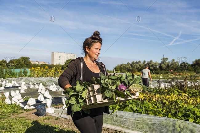 Women working on allotment