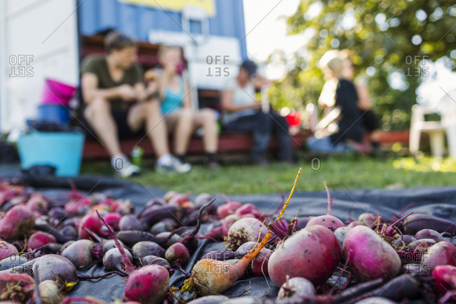 Beetroots on blanket, people sitting in background