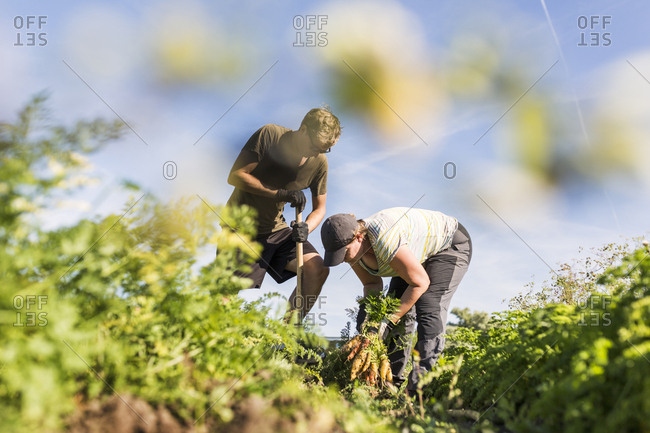 People working on allotment