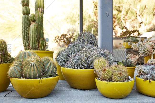Cactus detail landscaping on mid-century modern property
