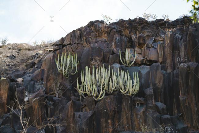 Cactus growing on rocks against sky