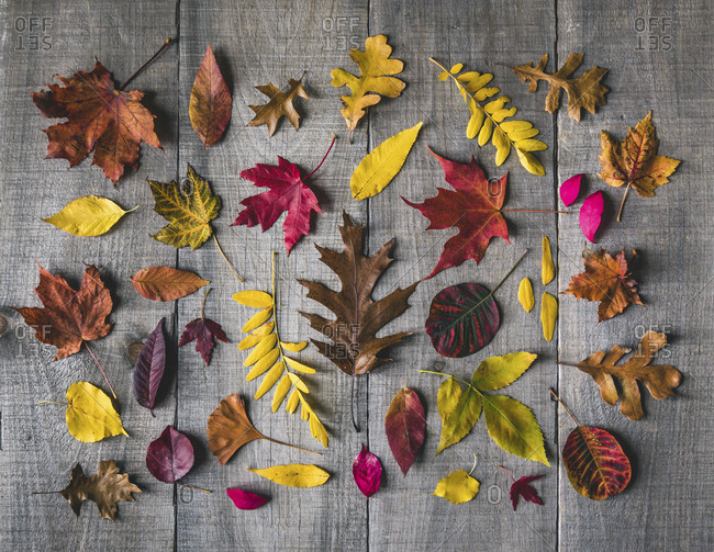 Overhead view of various leaves on wooden table during autumn