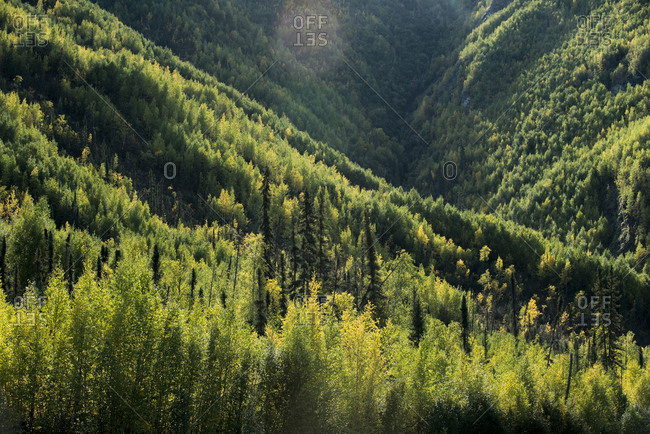 High angle view of trees growing in forest at Yukon Charley Rivers National Preserve