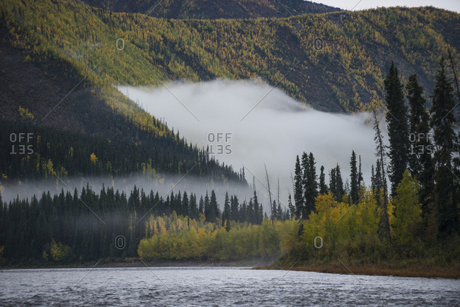 Scenic view of river by trees Yukon Charley Rivers National Preserve during foggy weather