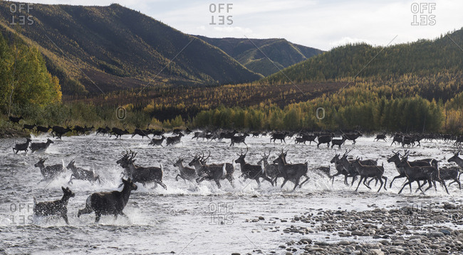 Deer running in river against mountains at Yukon Charley Rivers National Preserve
