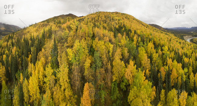 Scenic view of trees in forest against sky