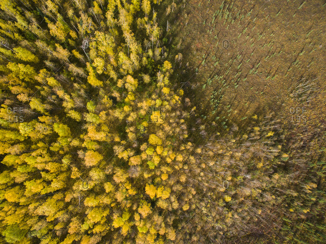 High angle view of trees on field in forest at Denali National Park and Preserve