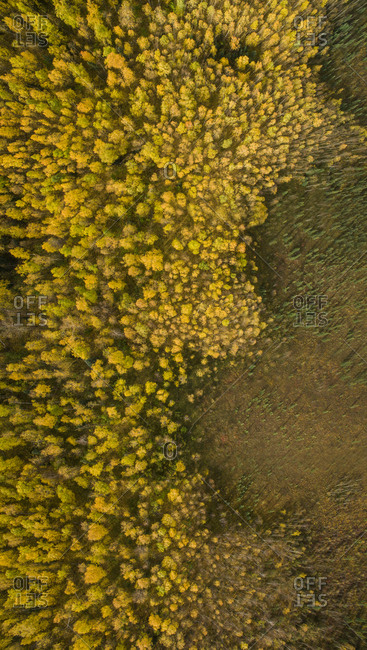 Aerial view of trees on field in forest at Denali National Park and Preserve