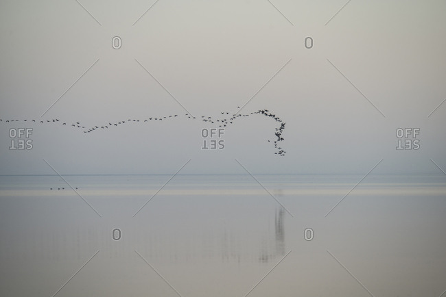 Flock of birds flying over Salton Sea against sky