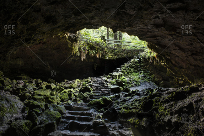 Scenic view of Ape Cave amidst forest