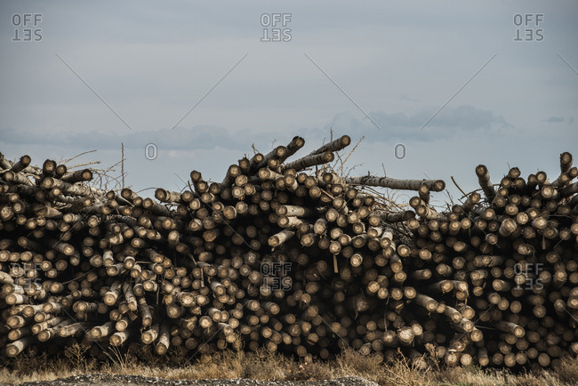 Stack of wood on field against sky