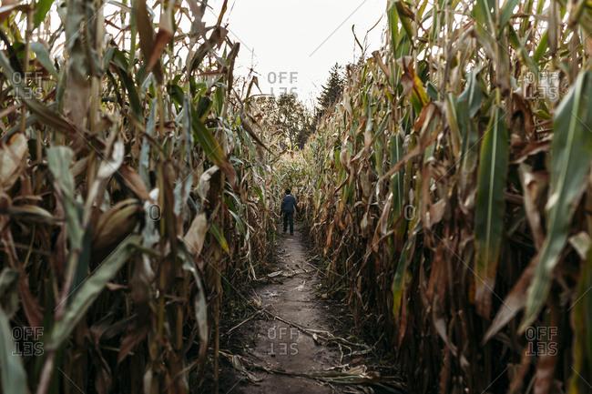 Rear view of boy walking in farm