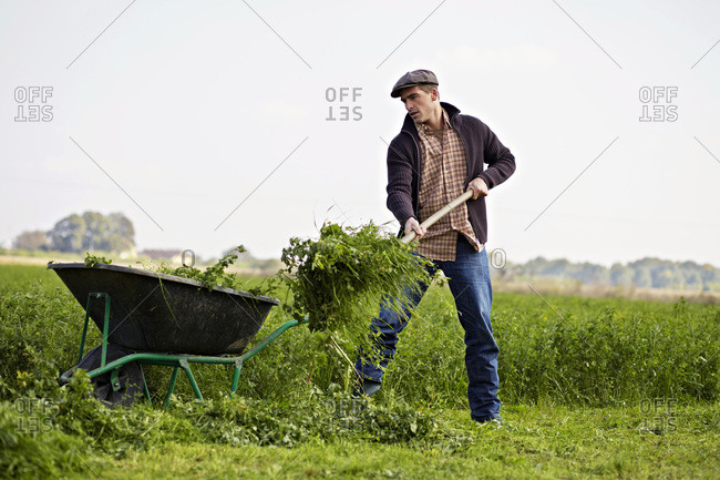 Man Working On Field, Baranja, Croatia, Europe