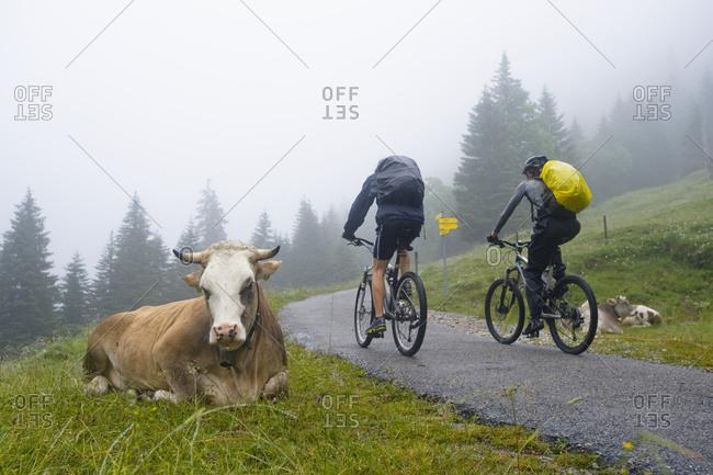 Mountain Bikers, Schwangau-Bleckenau, Bavaria, Germany