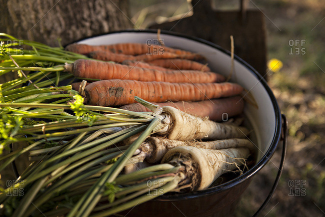 Fresh Vegetables, Croatia, Slavonia, Europe