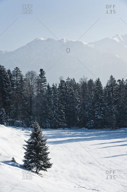 Snowcapped fir trees against mountain range, Garmisch, Bavaria, Germany