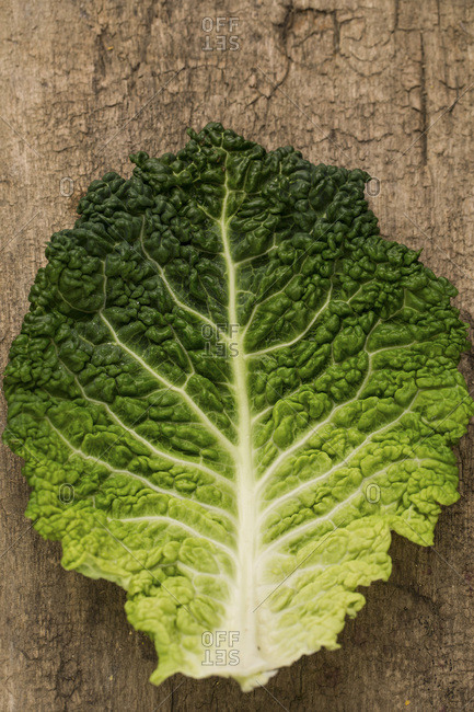 Savoy Cabbage, Leaf, Germany