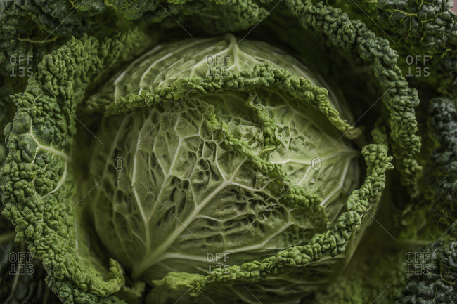 Savoy Cabbage, Close-Up, Germany