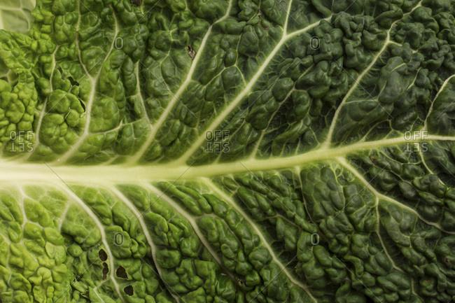 Savoy Cabbage, Leaf, Germany