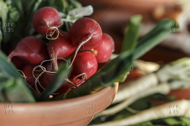 Fresh radishes, close-up