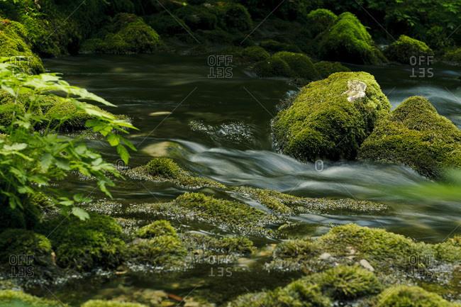 Creek, water flowing over mossy stones, Plitvice Lakes, Croatia